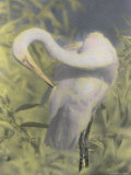 A Great Egret Photographed with Infrared Film