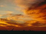 Twilight Sky with Sunlit Clouds