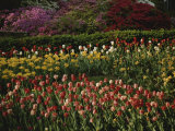 A Colorful Combination of Garden Flowers at the Wardman Park Hotel