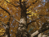 A Tree Trunk Surrounded by Yellow Autumn Leaves
