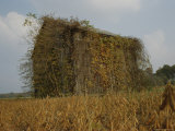 Autumn-Colored Vines Cover an Old Barn in a Field Near Easton