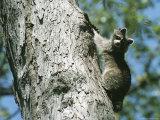 A Raccoon on a Tree Trunk in Rock Creek Park