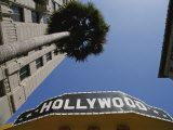 A Tour Bus Sign and a Palm Tree Scream out Hollywood