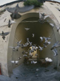 A Flock of Pigeons Fly out of an Arched Passageway in Siena  Italy
