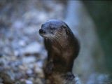 Close View of a River Otter