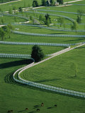 Aerial View of Donamire Farms Fenced Pastures