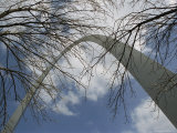 Skyward View of the Gateway Arch Through Leafless Tree Branches