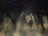 White Rhinoceros  Hluhluwe National Park  South Africa