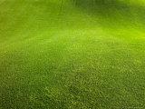 Regular Grass on a Golf Course