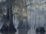 Spanish Moss Drapes Old Cypress Trees on Lake Verret  Louisiana