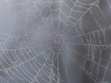 A Close View of Water Drops on a Spider Web
