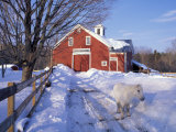 Pony and Barn near the Lamprey River in Winter  New Hampshire  USA