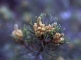 Pinon  New Mexico  USA
