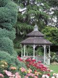 Gazebo and Roses in Bloom at the Woodland Park Zoo Rose Garden  Washington  USA
