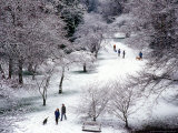 Fresh Snow in the Arboretum  Seattle  Washington  USA