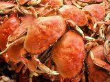 Fresh Crab in Pike Street Market  Seattle  Washington  USA