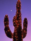 Lighted Wickenburg Cactus  AZ