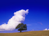 Tree and Cloud  Atlantic Wood
