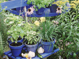 Herbs in Painted Pots