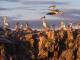 Lake Scenes  Birds at Sunset