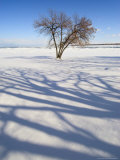 Tree Among Snow with Shadow