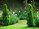 Country Garden Filled with Roses and Borders with a Pond and Old House  Wiltshire