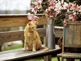 Close-up of Alert Ginger Cat  on Wooden Bench  with Twigs of Flowering Magnolia in Metal Jug