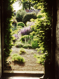 View Through Doorway Framed with Taxus to Country Flower Garden  Northumberland