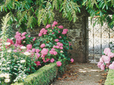 Pathway and Gate Low Clipped Box  Hydrangea