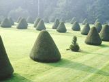 Yew Topiary Parnham House  Dorset