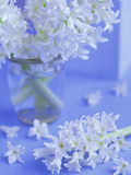 White Hyacinths in Vase with Flowers at Base Set Against Pale Blue Background