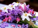 Spring Bouquet of Hyacinthoides Non Scripta (Bluebells)