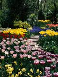Mixed Spring Bulbs Tulipa Narcissus Muscari Narcissus Path Tulipa