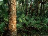 Subtropical Rainforest  USA