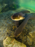 Longfin Eels, New Zealand Papier Photo par Tobias Bernhard