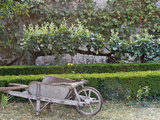 Wooden Barrow Against Low Clipped Box Hedges with Pleached Apple Trees; Old Grey Stone Wall