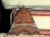 Herald Moth on Stack of Books  Devon