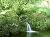 Aira Beck Between Falls of High Force and Aira Force  the Lake District  UK