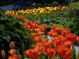 Sunken Garden  Butchart Gardens  Victoria  British Columbia  Canada