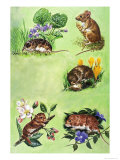 Mice  Voles and Shrews