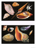 All Sorts of Sea Shell  Illustration from Once Upon a Time  1970
