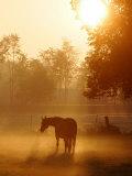 A Horse Stands in a Meadow in Early Morning Fog in Langenhagen Germany  Oct 17  2006