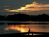 A Cormorant is Silhouetted Against the Waters of Lake Talquin