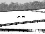 A Pair of Horses Graze Through a Pasture Near Midway, Ky. Papier Photo