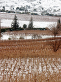 A Snow-Covered Vineyard is Seen During a Snowfall