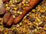 Beadmaker Displaying Samples  Asameng  Ghana