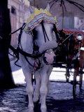 Horse Carriage  Sorrento  Italy