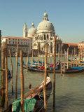 Gondolas near the Grand Canal and the Santa Maria Della Salute  Venice  Italy