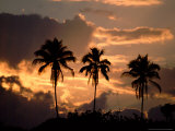 Sunset and Palm Trees  Tortuguero National Park  Costa Rica