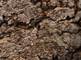 Close-up of Rough Gray and Brown Tree Bark